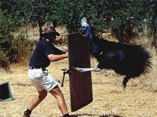 Casoar attaque australie