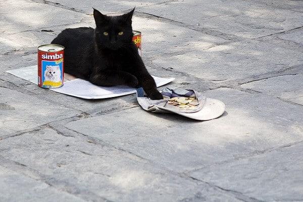 Chat mendiant - Sécurité