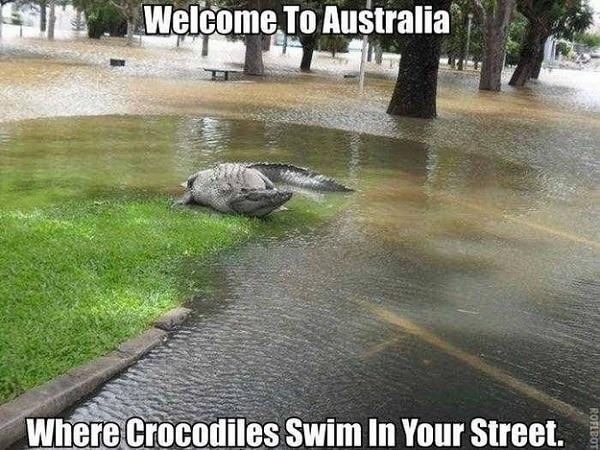 Crocodile rue Australie