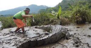 Crocodile nourriture Costa Rica