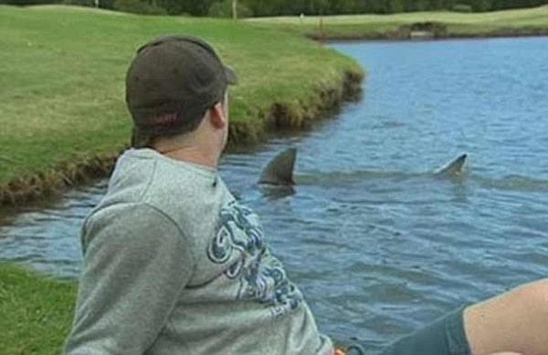 Golf requin Australie