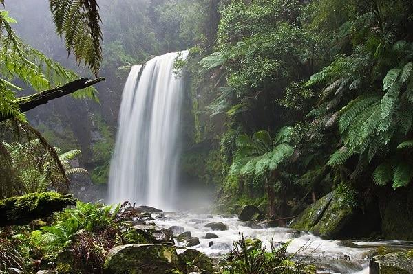 Hopetoun Fall Otway National Park - Great Ocean Road - Australie