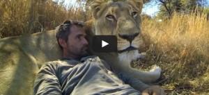 Kevin Richardson Lion