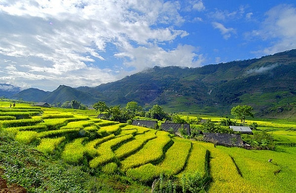 Riziere Sapa Vietnam