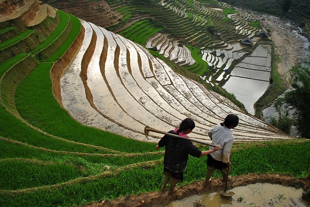 Le Nord du Vietnam : Sapa et ses rizières