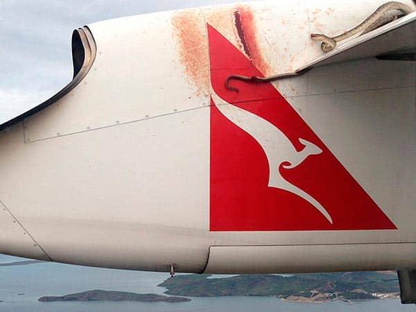 Serpent avion Australie