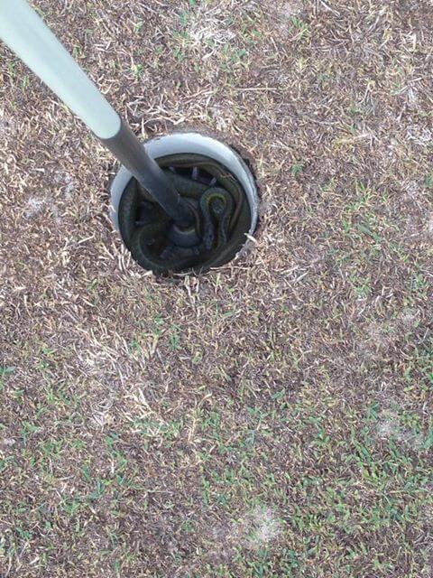 serpent golf Australie