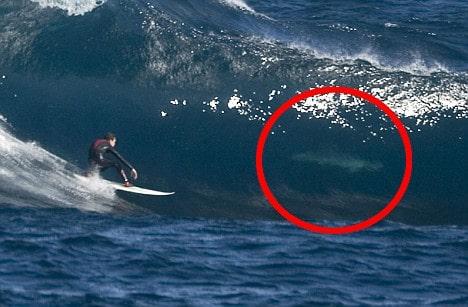 Surfeur requin Australie