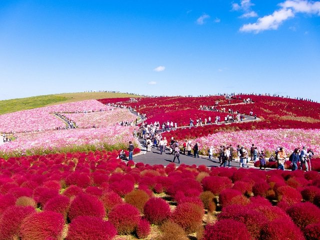 Hitachi Seaside Park, Japón