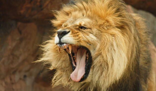 Quel est l'animal le plus dangereux pour l'homme ?