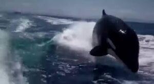 Orques, Mexique