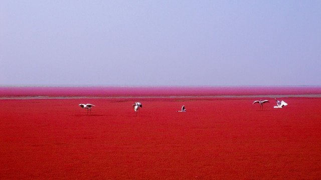 Plage Rouge Panjin Chine