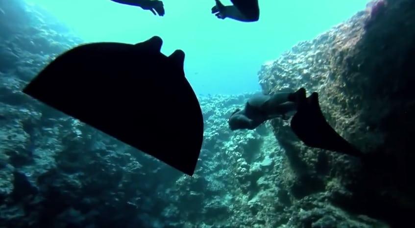 3 sirènes nagent avec des baleines
