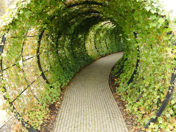 Tunnel Alnwick Garden