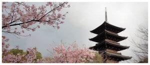 Amnesiart Japon