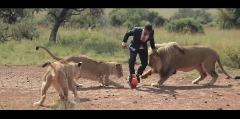 Il joue au foot avec des lions sauvages