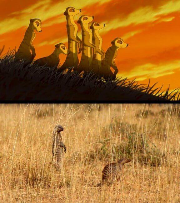 Masai Mara Kenya vs Le Roi Lion, Brandon Heuser