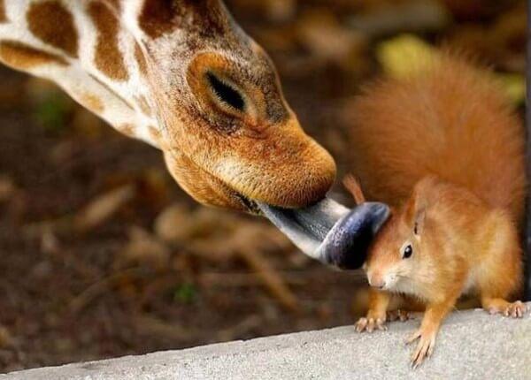Photos prises au moment parfait, animaux, nature, etc...
