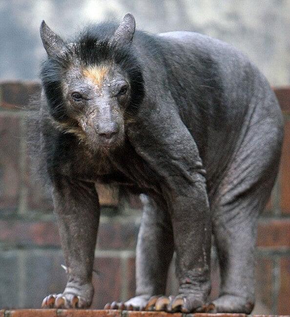 ours sans poils
