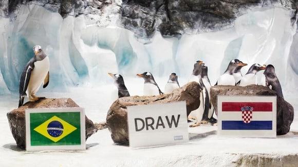 Alf le pingouin, pronostics football