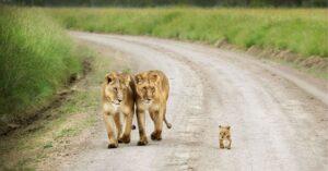 Animaux parents et leur bébés, élever, photo