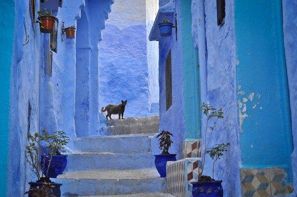 Le paradis bleu de la médina de Chefchaouen au Maroc