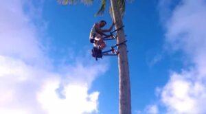 Invention monter arbre cocotier