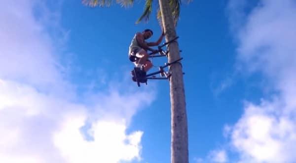 Cet homme grimpe à un cocotier sans effort