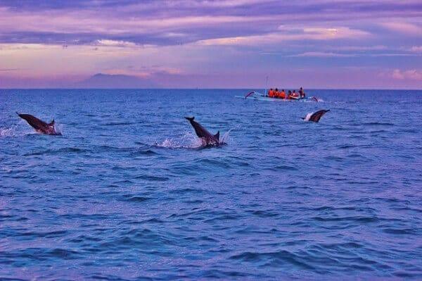 Lovina Beach dauphins Bali