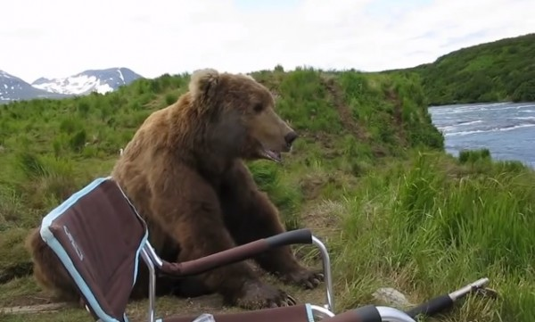 Un ours brun vient s'asseoir à côté d'un campeur