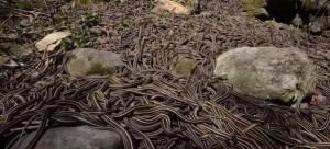 Rivière de serpents