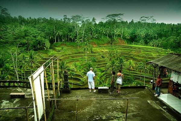 Rizières en terrasses à Tegalalang, Bali
