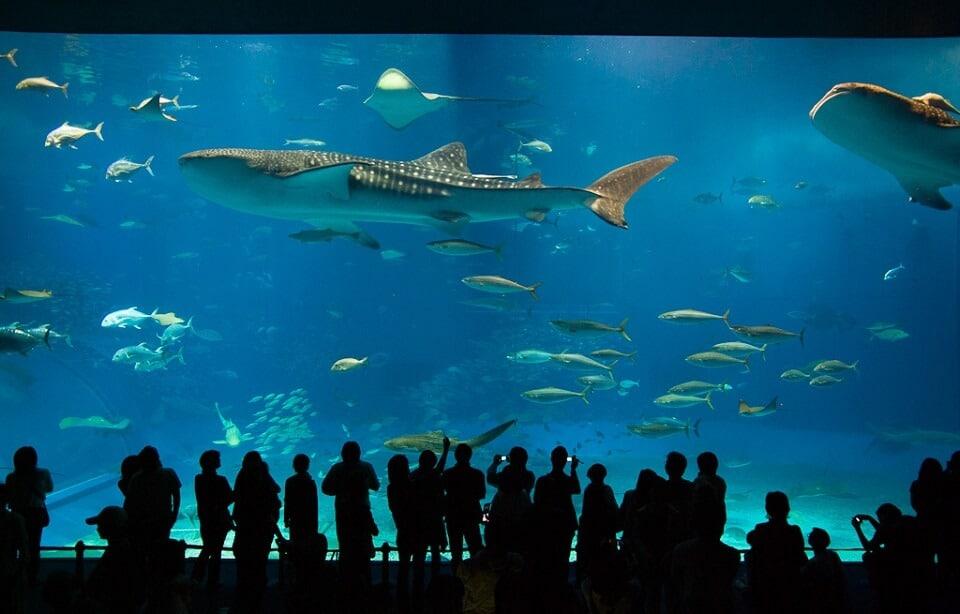 Aquarium Churaumi d'Okinawa au Japon