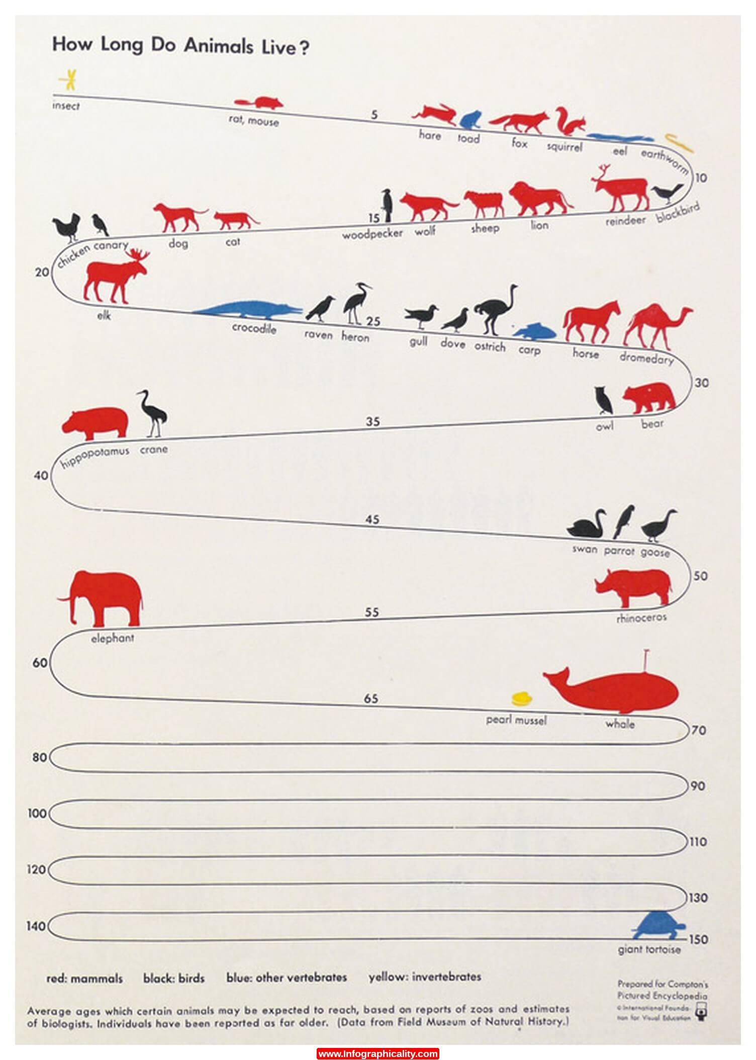 Combien de temps vit un animal ? Infographie