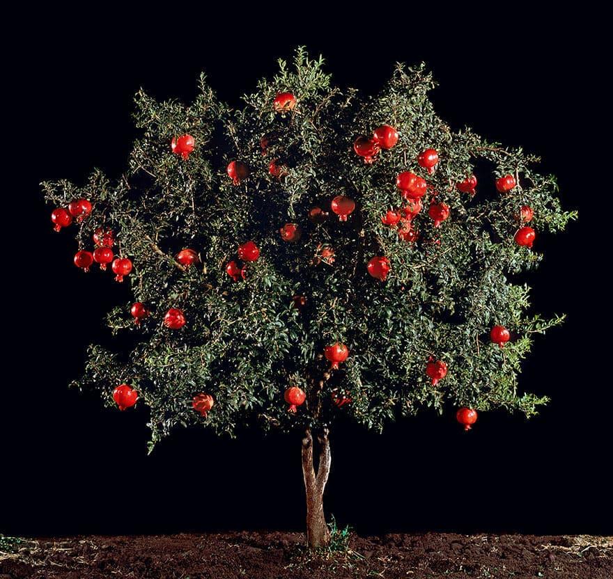 Comment poussent les fruits, légumes et épices