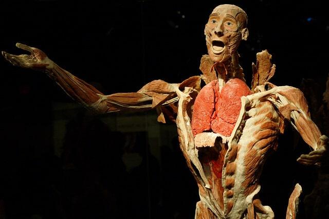 15 endroits visiter pour les fans de science for Interieur du corps humain