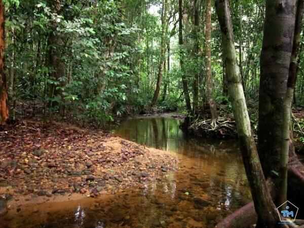 Forêt Sinaharaja Sri Lanka