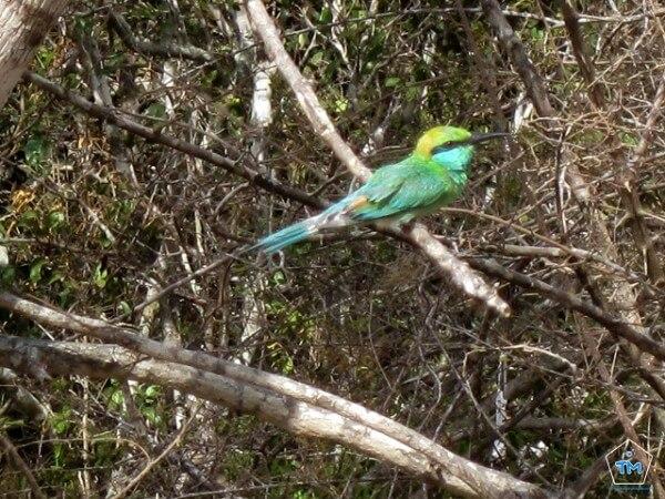 Parc Yala Sri Lanka
