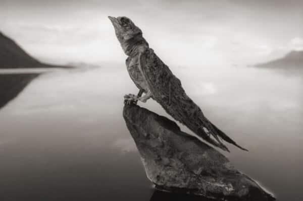 lac calcifié