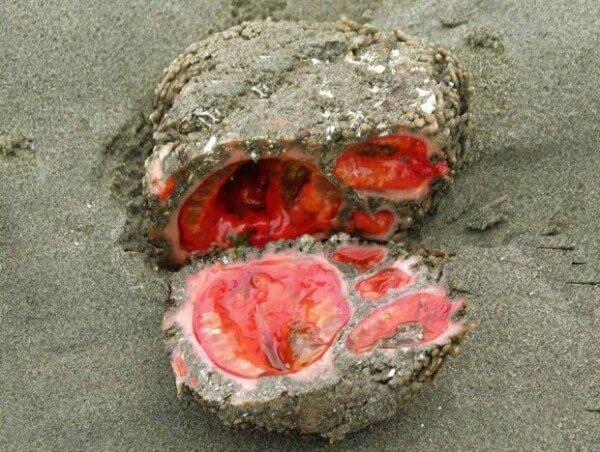 rocher biologique