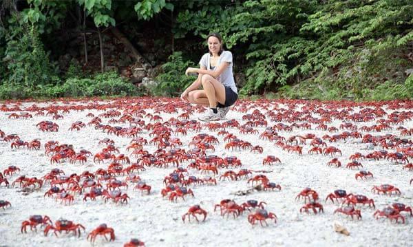 crabes migration