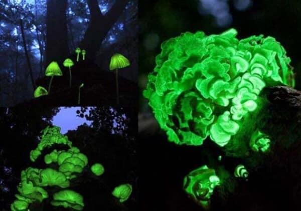 forêt fluo