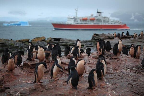 Pingouins Adélie croisière Antarctique