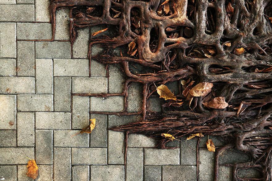 racines d'arbres, combat nature contre civilisation