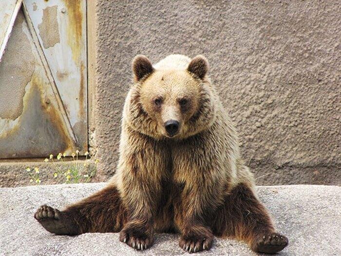 Santra ours yoga zoo Ahtari, Finlande