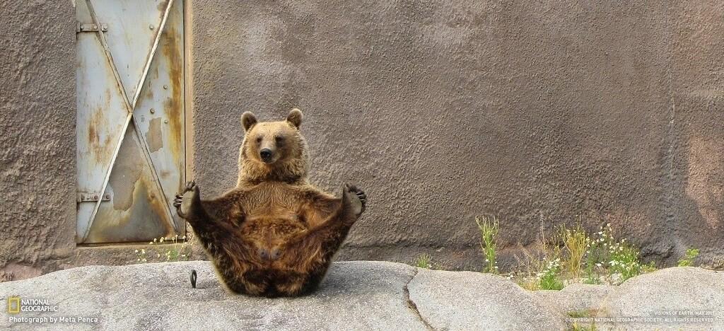 Un ours fait du yoga dans un zoo finlandais