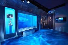 Attaque de requin dans un musée