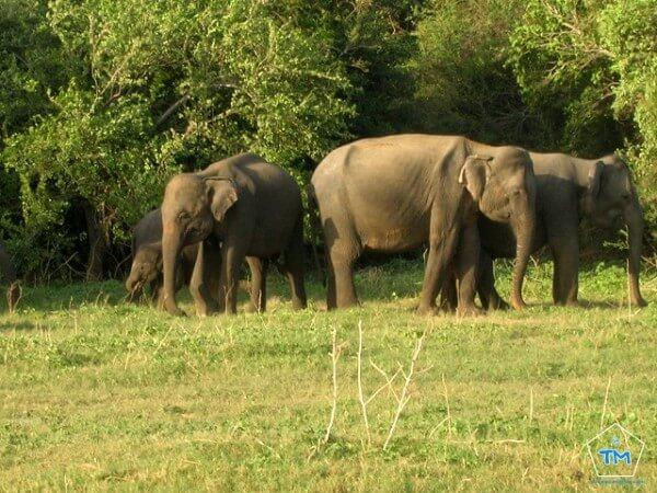 Uda Walawe Sri Lanka