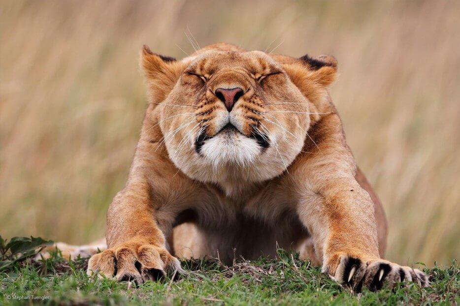 Vie sauvage Wildlife 2014