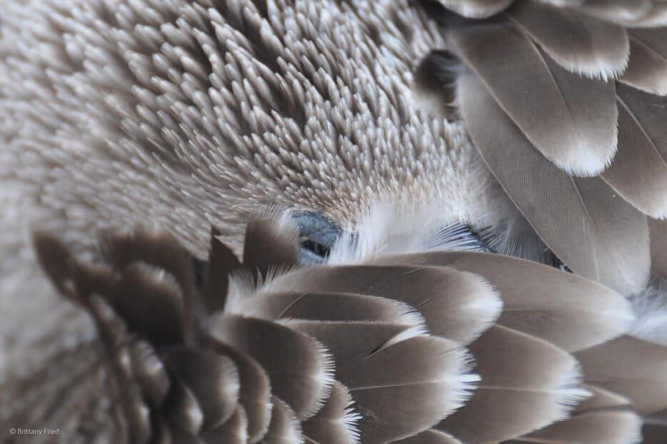 vie-sauvage-wildlife-2014-18